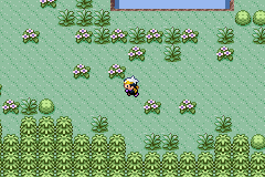 Pokemon Citrite GBA ROM Hacks